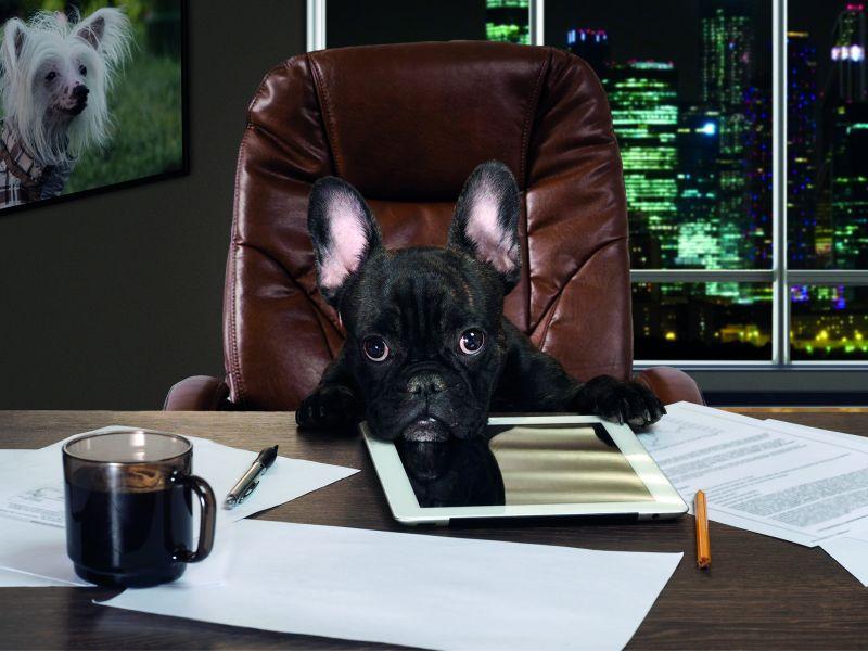 Der Bürohund ist Chefsache